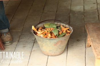How to Get Rid of Fruit Flies in Your Compost Pile