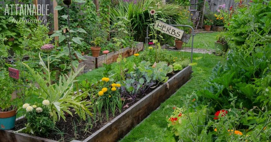 edible front yard garden in a raised bed