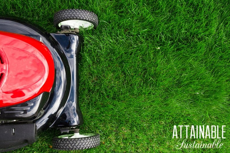 A lush green lawn has become a mandatory calling card in many communities. But your lawn might be making you sick. And it's certainly not a sustainable solution. Here's why you should consider ditching the grass for a healthier family and planet!