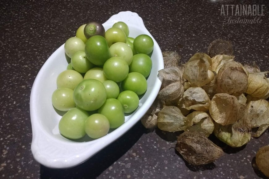 peeled tomatillos in a white dish, with husks off to the right