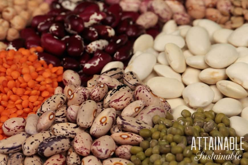 dry beans and lentils, several varieties