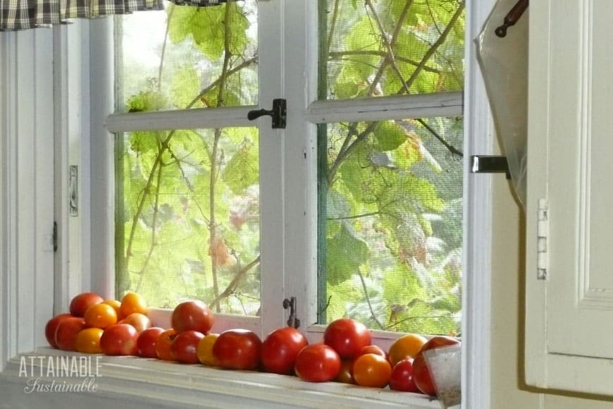 vine ripe tomatoes sitting in a windowsill