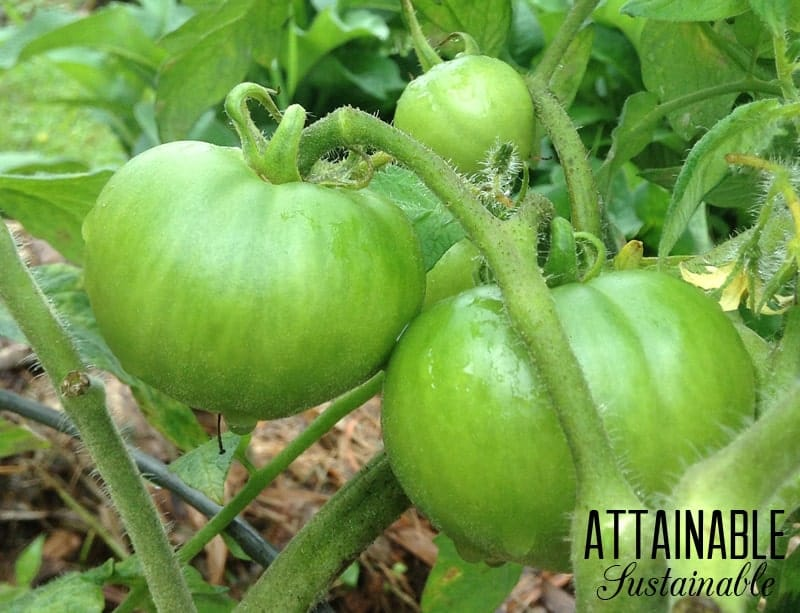 green-tomato-relish