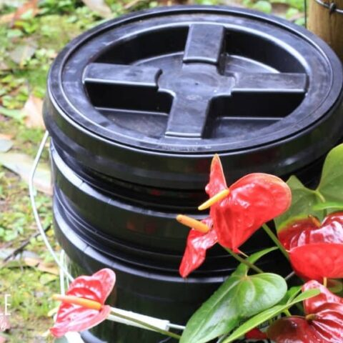 worm bin outside with red flowers