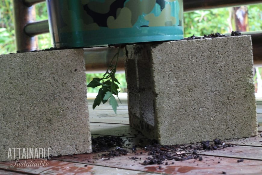 upside down tomato planter sitting on two concrete blocks
