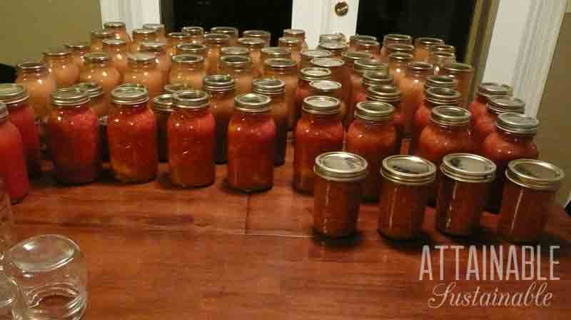 Dozens of jars on a table, filled with home preserved foods