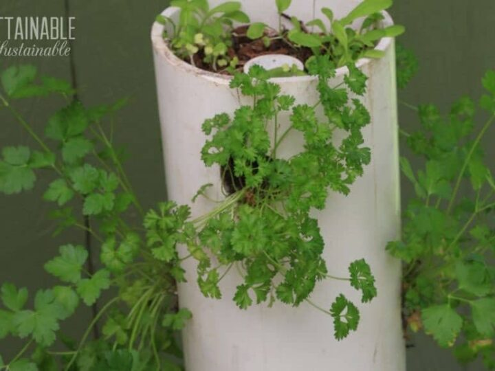 Make This Pvc Tower Garden To Grow Lots Of Greens In A Small Space