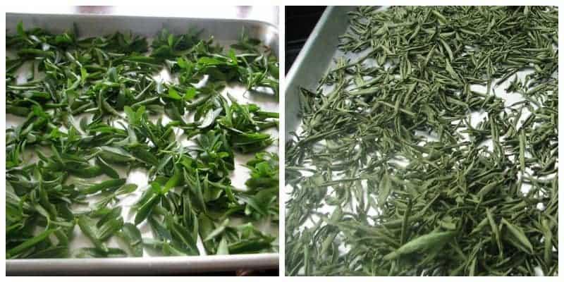 stevia drying