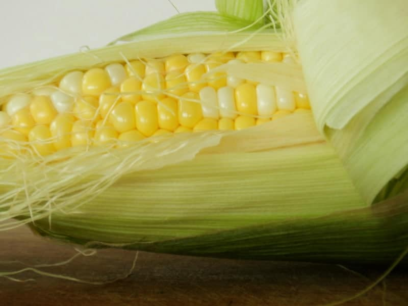 corn on the cob with husk pulled back. representative of gmo ingredients