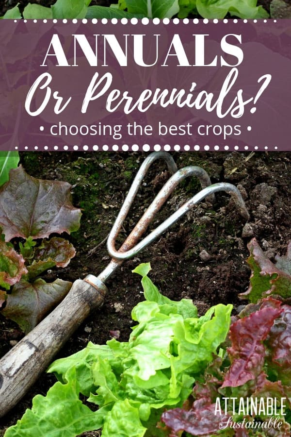 Trying to figure out what will provide the best harvest for your space? Understanding annuals vs. perennials is a good place to start planning a garden. #homestead #garden #growfood