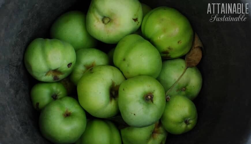 green apples in a bucket