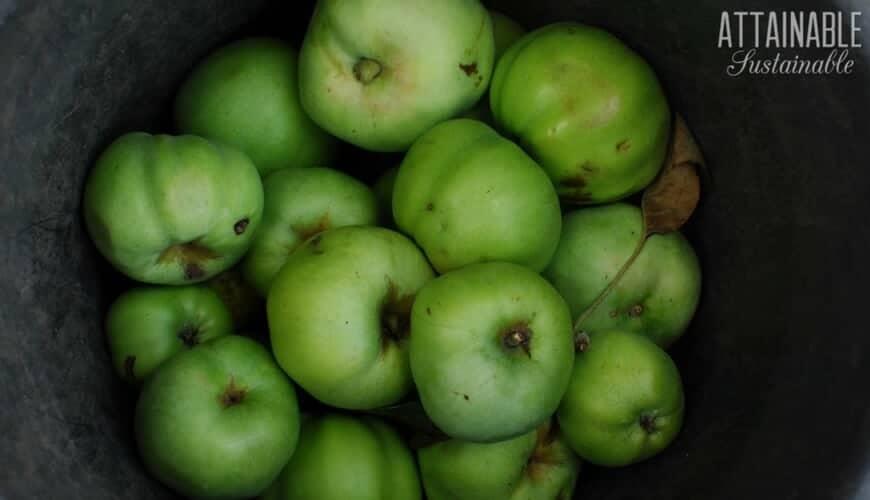 green apples in a bucket