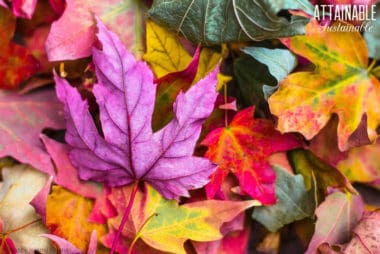 fall leaves in bright fall colors
