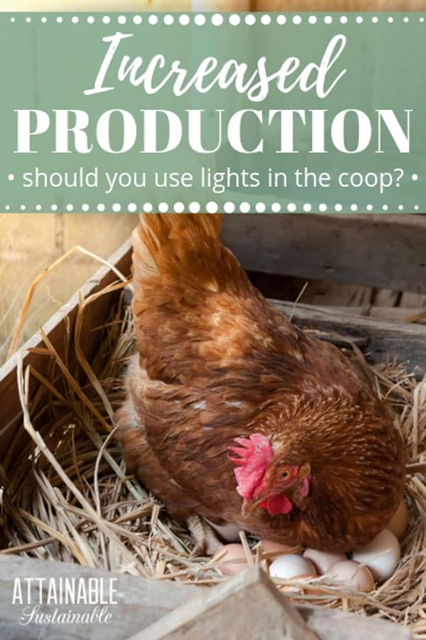 Wonder why egg production decreases in the wintertime? Here's why, how chicken lights help, & discussion about whether or not you should use them. Lighting your chicken coop in the winter can alter Mother Nature's plans; you'll just need to decide if that's something you want to do or not. #poultry #homestead #chickens