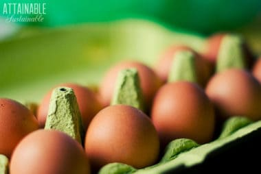 brown eggs in a green paperboard egg carton