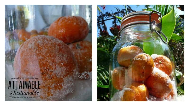 Preserving tangerines with salt is an easy way to have that fresh citrus flavor on hand for cooking all year long.