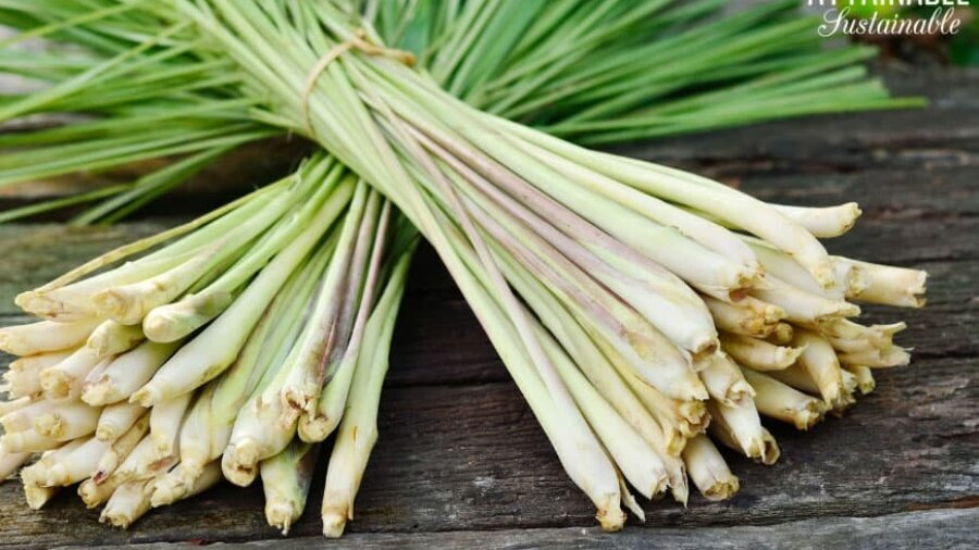 2 bundles of lemongrass stalks on a wooden table