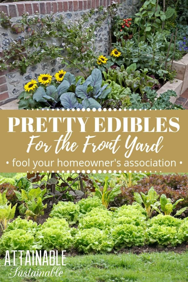 Planting a front yard garden full of pretty edibles -- annual and perennial vegetables -- is a great way to use the most of your space. Edible front yard landscaping allows you to harvest vegetables from an otherwise unused space. Choose these pretty vegetable plants and your homeowner's association will never know! #garden #growingfood #urbangarden