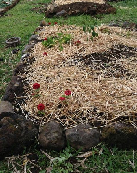 raised bed garden with rock edges and filled with soil topped by straw