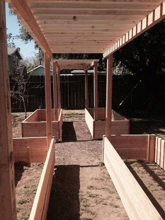 raised garden beds with wood arbor, freshly built