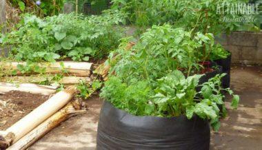 small garden ideas: grow bags