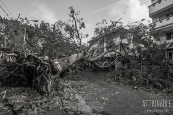 black and white image of a downed tree