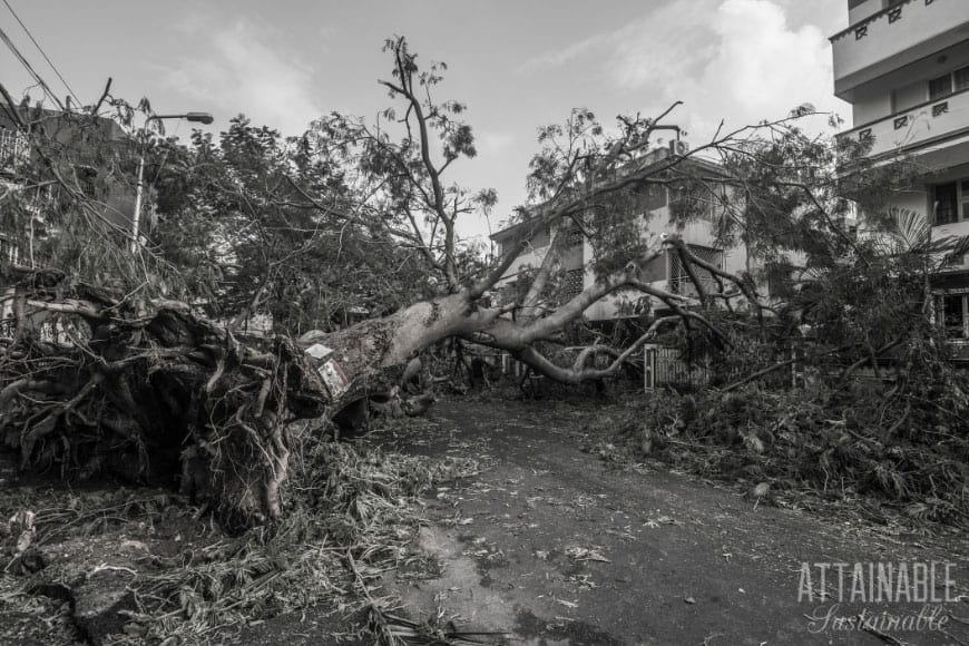 black and white photo of a tree down in an emergency situation - text: Emergency essentials