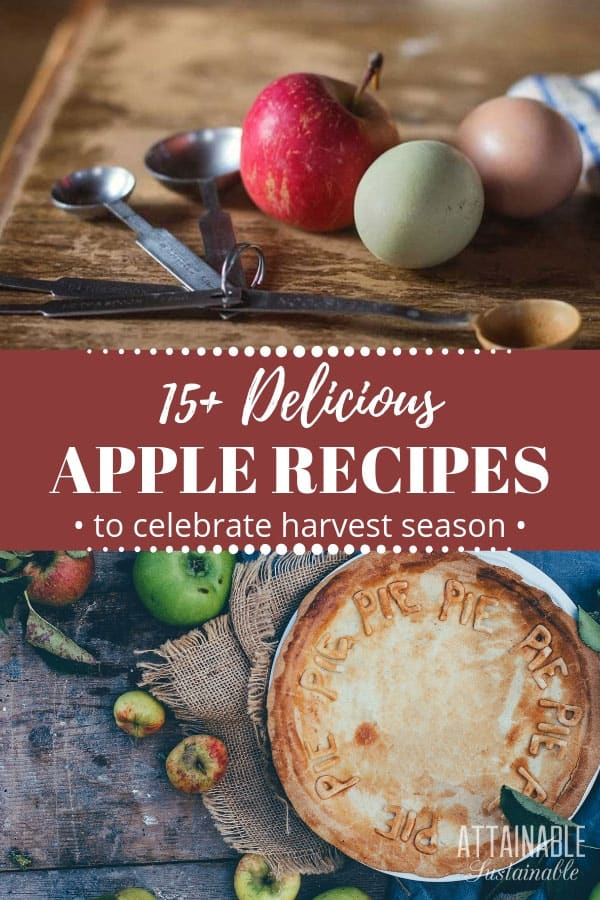 These apple recipes range from sweet to savory. When it's harvest time in the orchard and apples are abundant, bake some up into a pie, crisp, or cobbler for dessert. Or can them for a pantry staple you can enjoy year round. Whether you have a handful or a bushel full of fresh apples, here are some ways to use them. #baking #recipes #farmfresh