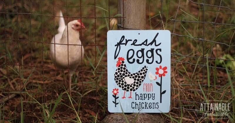 6 Mistakes I Made in the Hen House (And How You Can Avoid Them)