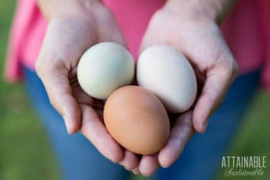 hands holding colorful chicken eggs