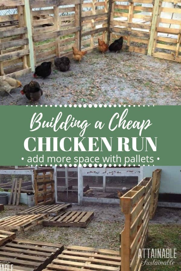 Building a recycled pallet chicken coop extension is a great way to create more space for your hens to peck. This easy chicken coop extension will keep your poultry flock from roaming too far afield, while giving them more space to scratch and peck and seek out bugs and fodder. Your hens will be so happy! #poultry #chickens #pallets