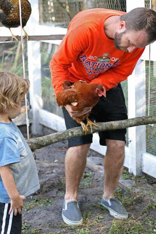 bearded man in orange shirt placing a hen on a swing for chickens