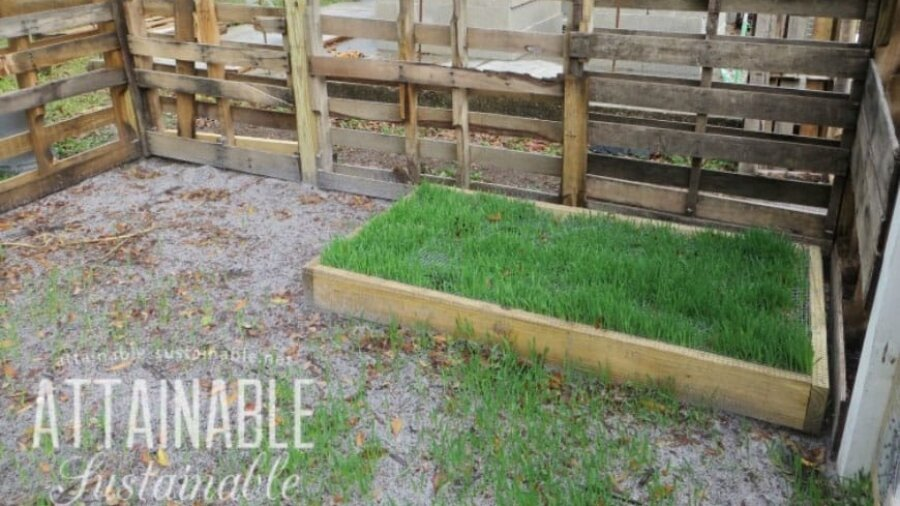 green grass in a wooden grazing box