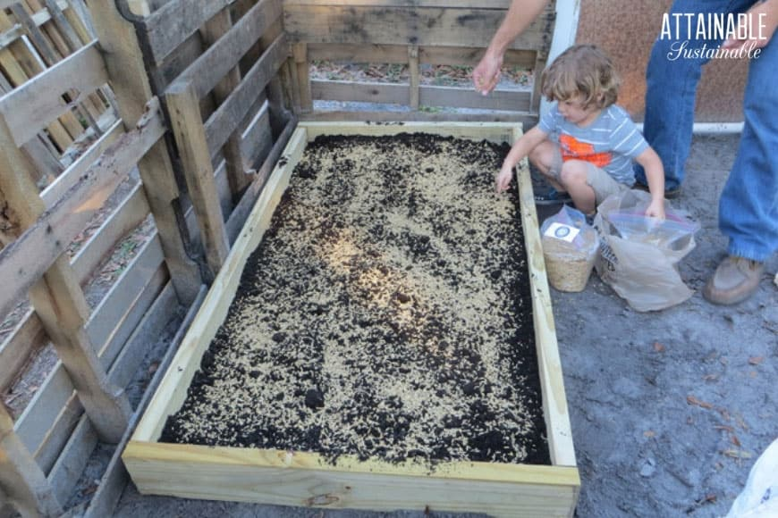 toddler planting seeds in grazing boxes