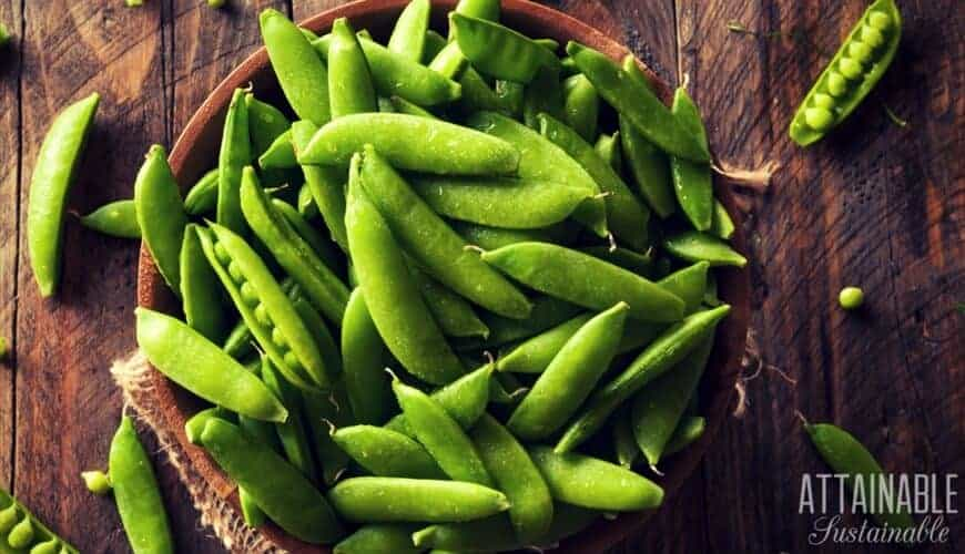 fresh sugar snap peas in a wooden bowl