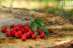 How to {Ethically} Forage for Edible Plants
