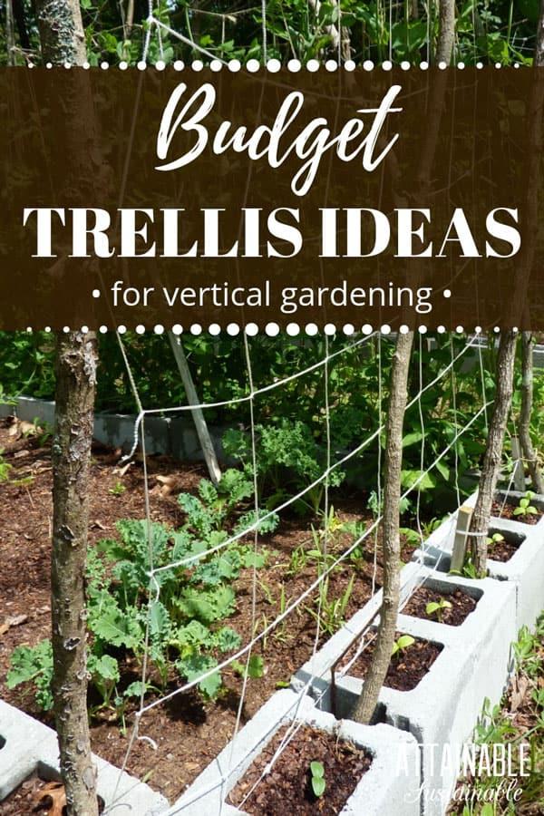budget trellis in a small garden of CMU blocks