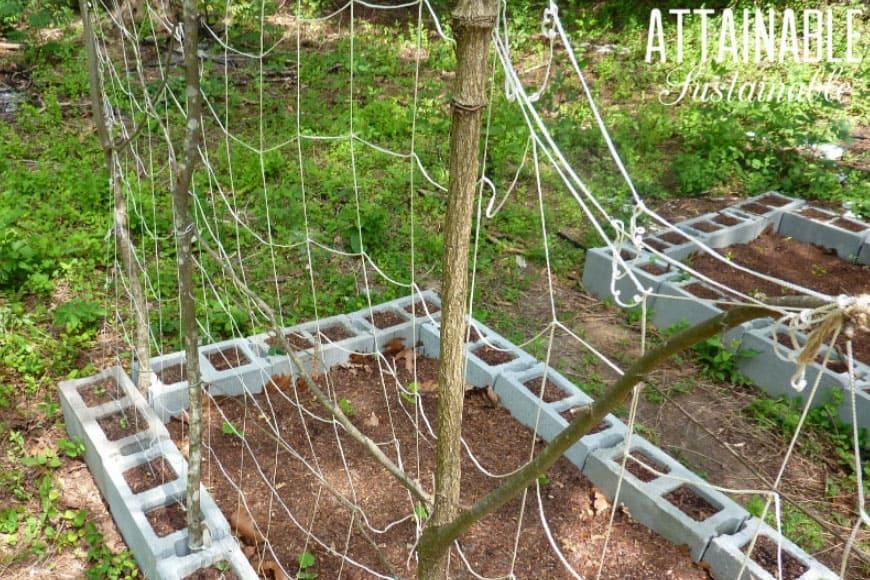 Diy Trellis Ideas For Growing A Vertical Garden On A Budget