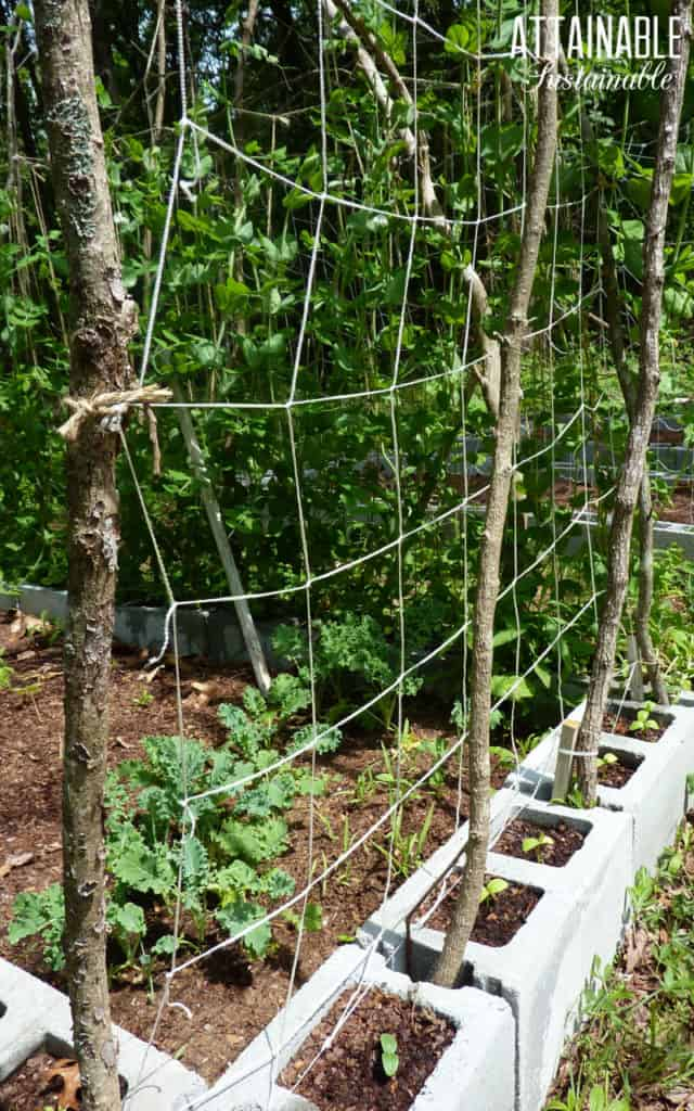 Garden trellis made from small limbs and twine