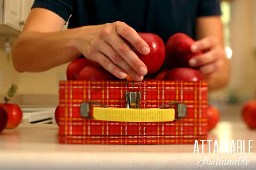 red plaid lunch box with healthy red apples