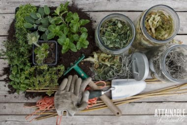 collection of garden equipment, plants in containers, and herbs in jars