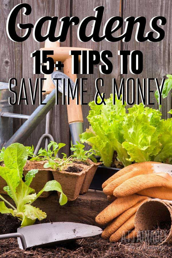 garden plants and tools, vegetable gardening tips to try