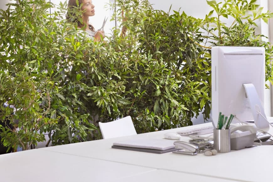 white desk with compute backgrounded by a bank of green plants
