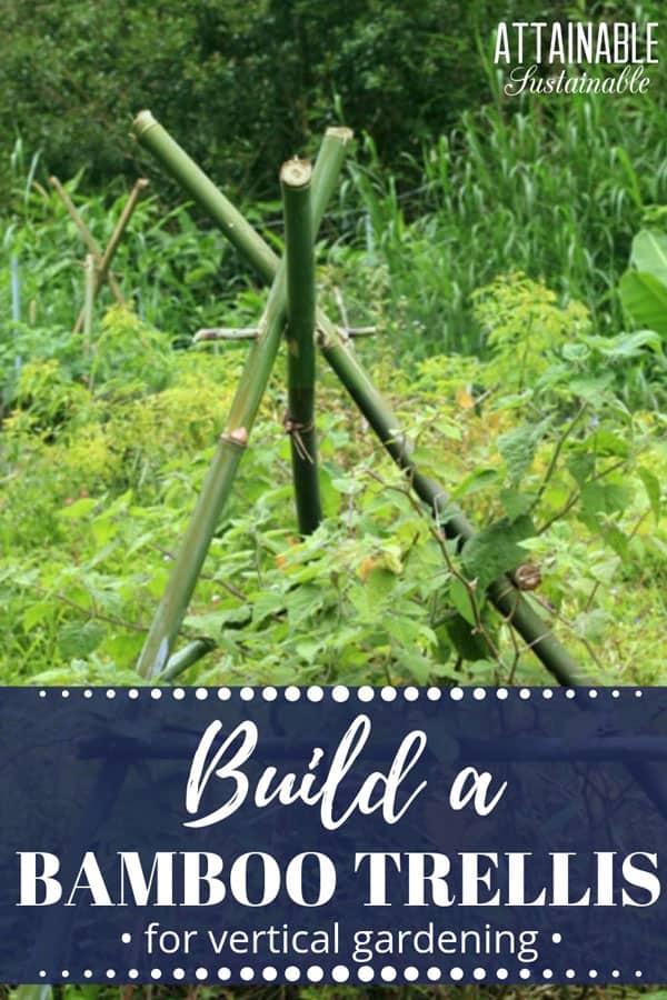 bamboo trellis in a lush, green garden