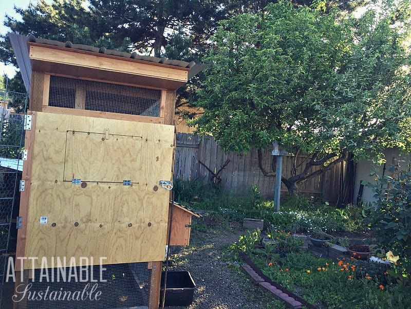 starting a homestead in the city - chicken coop in a backyard