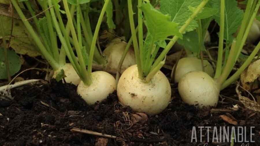 Drought Resistant Crops & Water Wise Techniques for the Veggie Garden