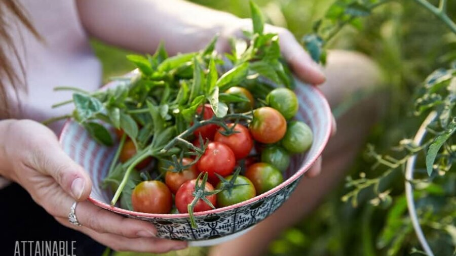 woman's hands holding fresh cherry tomatoes in a bowl