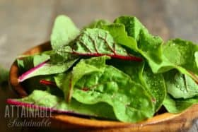 Growing Swiss Chard: Greens for Gardens and Container Growing