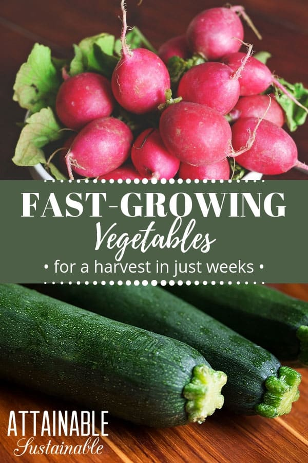 radishes and zucchini -- some of the fastest growing vegetables you can grow
