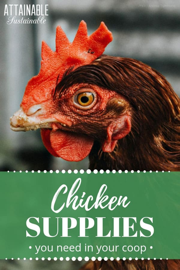close up of brown chicken with words: chicken supplies you need in your coop